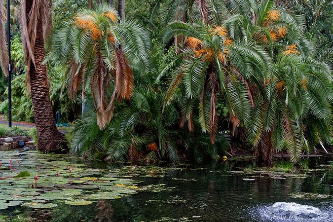 Brisbane city botanical garden